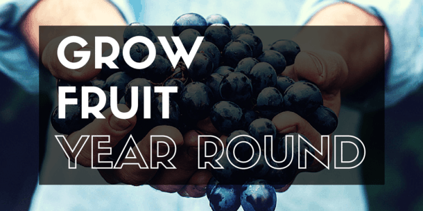Grow fruit year round