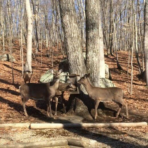 Deer Hunting Tip 3 Use Deer Attractants