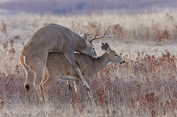 Deer Hunting Tip 6 Timing