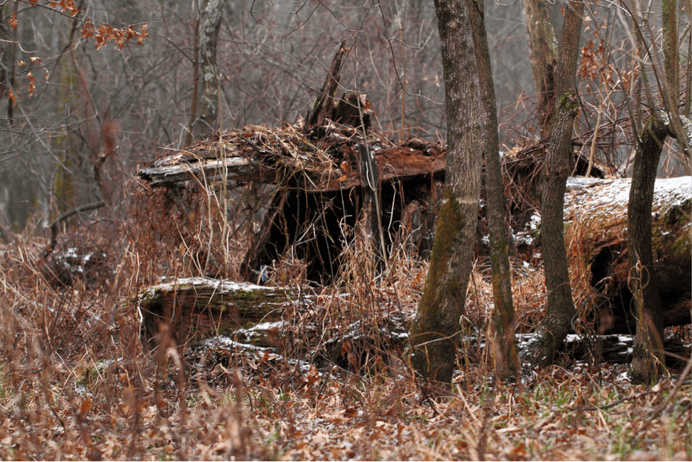 how to build a natural deer hunting blind know prepare