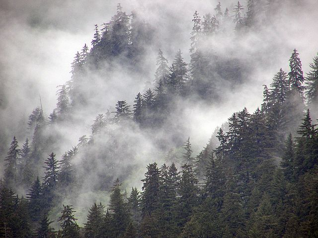 Wet Wood Temperate Rainforest Tongass National Park