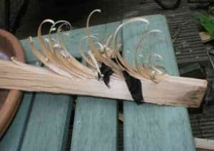 Feather stick for making a fire in the woods