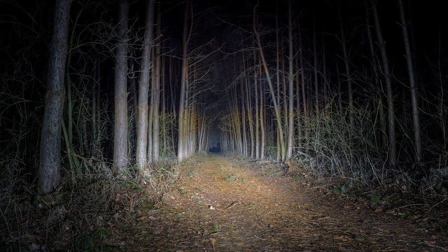 dark spooky forest at night illuminated by flashlight